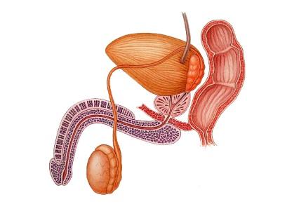 Diagnostic de la sténose urétrale