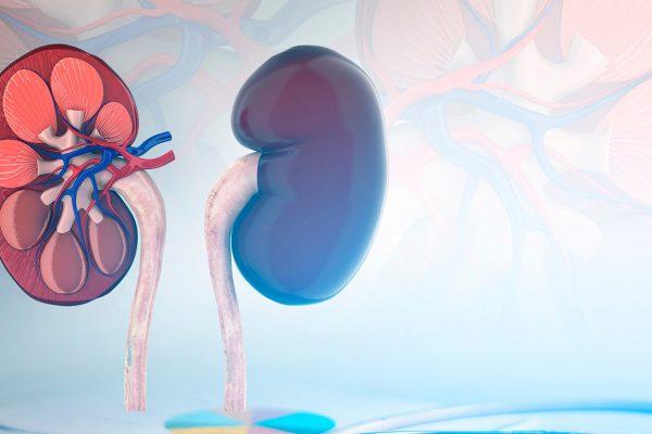 Tumeurs du rein : formes héréditaires des cancers du rein et dépistage génétique